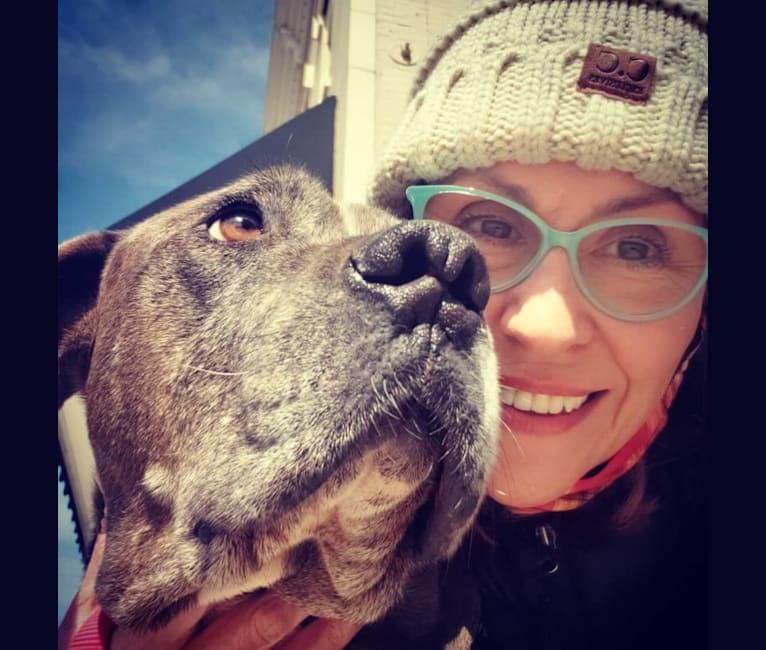Photo of Harvey, a Golden Retriever, American Pit Bull Terrier, Bulldog, and Boerboel mix in Georgia, USA