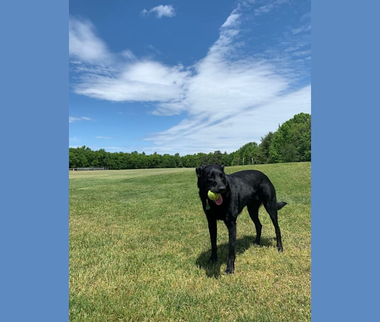 Photo of Charlie, an Australian Cattle Dog and Labrador Retriever mix in Tupelo Lee Humane Society, Cliff Gookin Boulevard, Tupelo, MS, USA