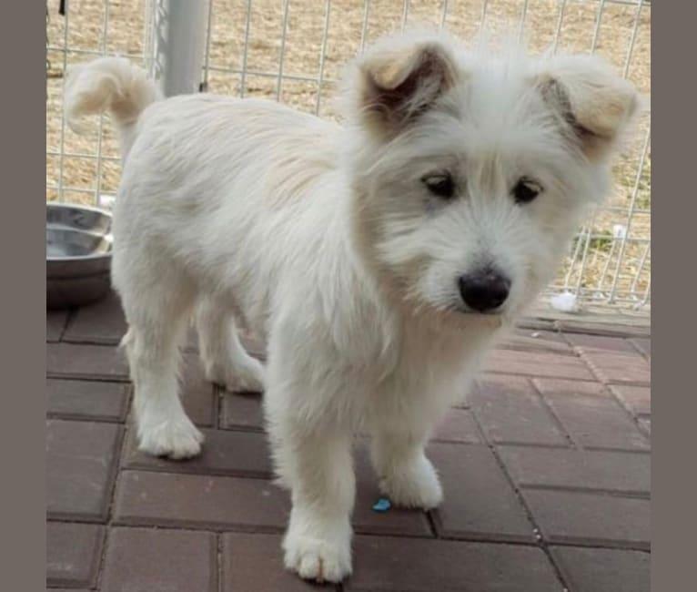 Photo of Django, an East Asian Village Dog and Shiba Inu mix in South Korea