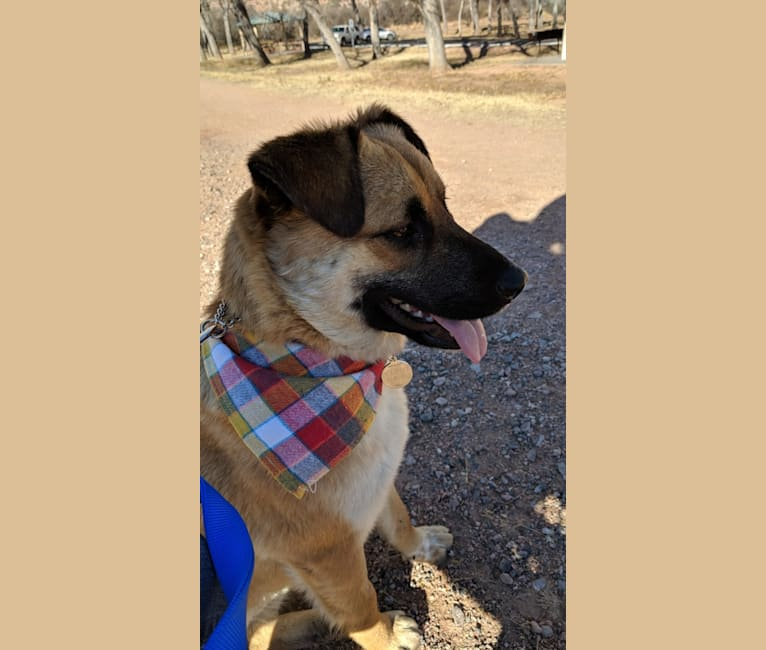 Photo of Kayeh, an American Pit Bull Terrier, Chow Chow, German Shepherd Dog, and Mixed mix in Kayenta, Arizona, USA