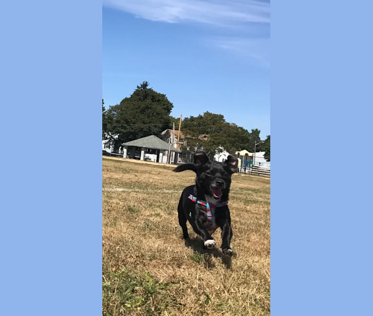 Photo of Remy, a Chihuahua, Poodle (Small), Miniature Schnauzer, Lhasa Apso, and Mixed mix in Pensacola, Florida, USA