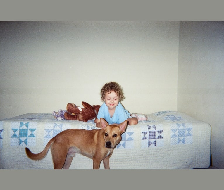 Photo of Kirby, a Pomeranian, American Pit Bull Terrier, Bulldog, Boxer, and Mixed mix in Jacksonville, Florida, USA