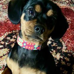 Puppy Dear