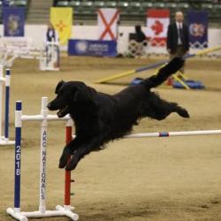 Blacklace Powderhound