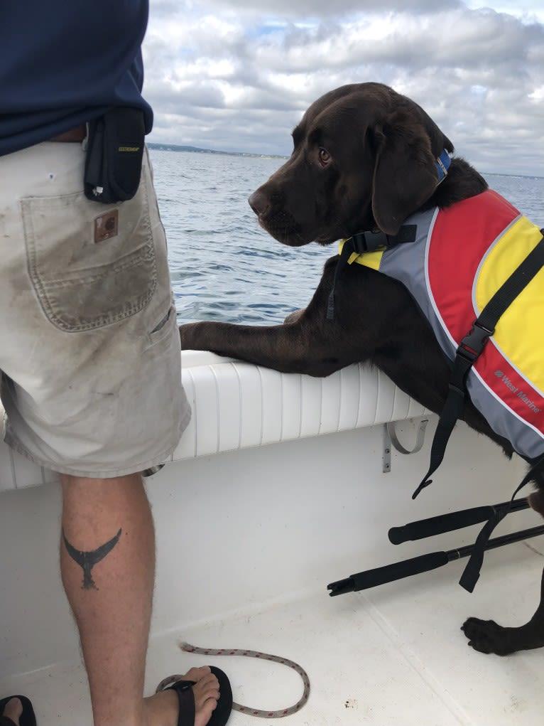 Photo of Zeke, a Labrador Retriever