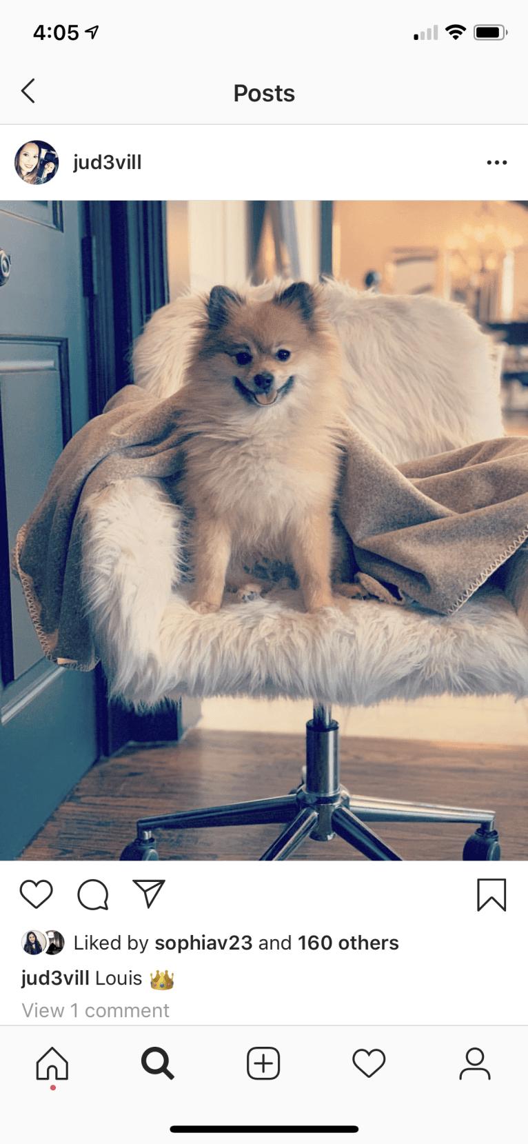 Photo of Louis, a Pomeranian  in Frisco, Texas, USA