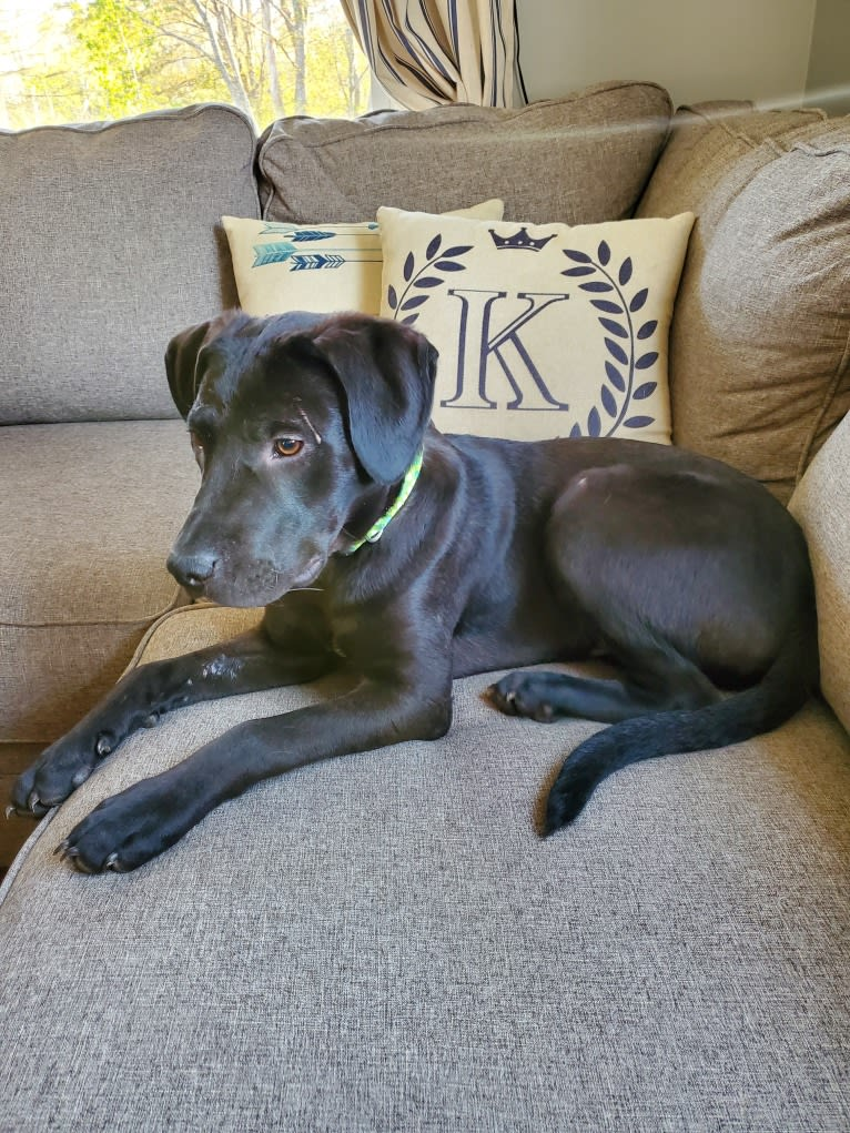 Photo of Jett, an American Pit Bull Terrier, Labrador Retriever, and American Staffordshire Terrier mix in Alabama, USA