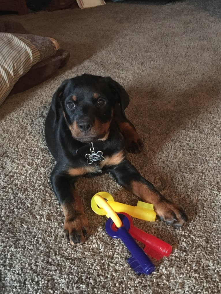 Photo of Emma Lou, a Rottweiler  in Indiana, USA