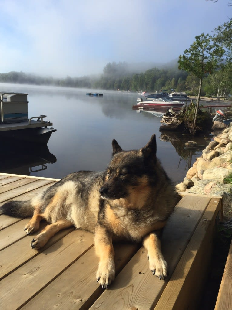 Photo of Cora, an Australian Cattle Dog and Keeshond mix in Hamilton, Ontario, Canada