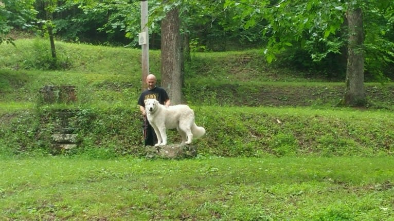 Photo of Sabrina Huffine, a Great Pyrenees and Australian Shepherd mix in Dunlap, Tennessee, USA