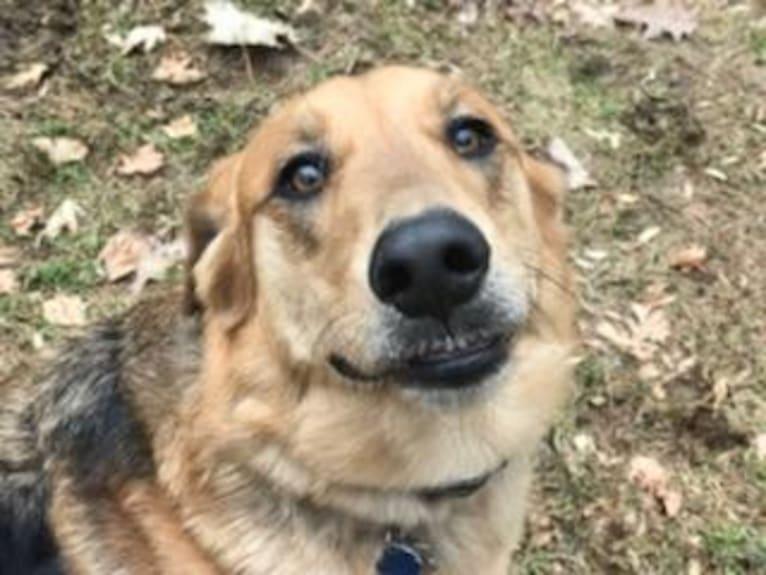 Photo of Bayley, a German Shepherd Dog, Golden Retriever, and Labrador Retriever mix