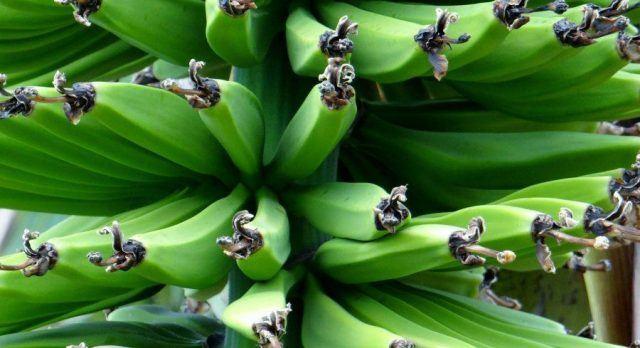 Tanzania Bananas