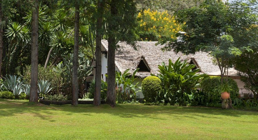 Plantation-Lodge-plantations and vineyards