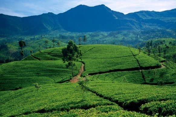 Green hills of Kandy