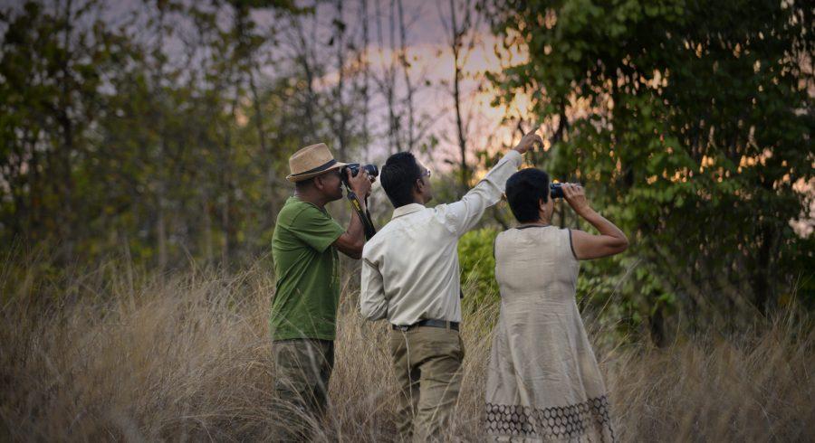 Birdwatching during safaris