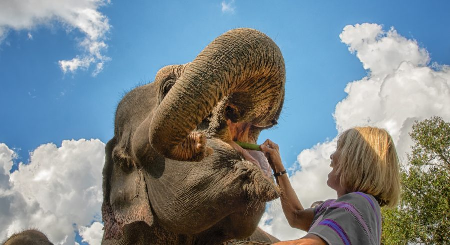 Travel Deals in Asia: Meet the elephants