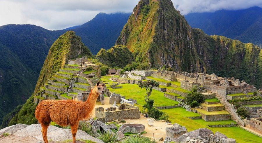 Llama standing at Machu Picchu overlook in Peru South America
