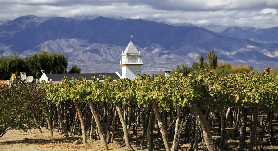 Cafayate in Argentina - plantations and vineyards