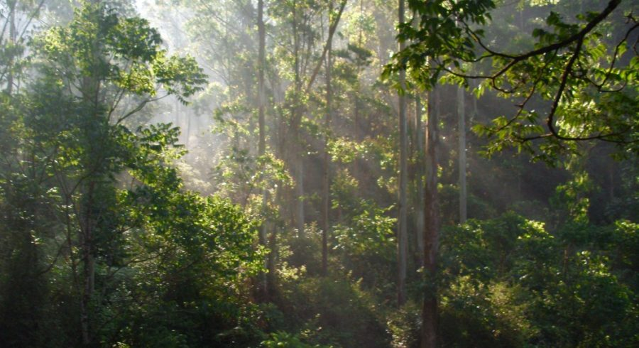 Sun rays in a forest in Kerala