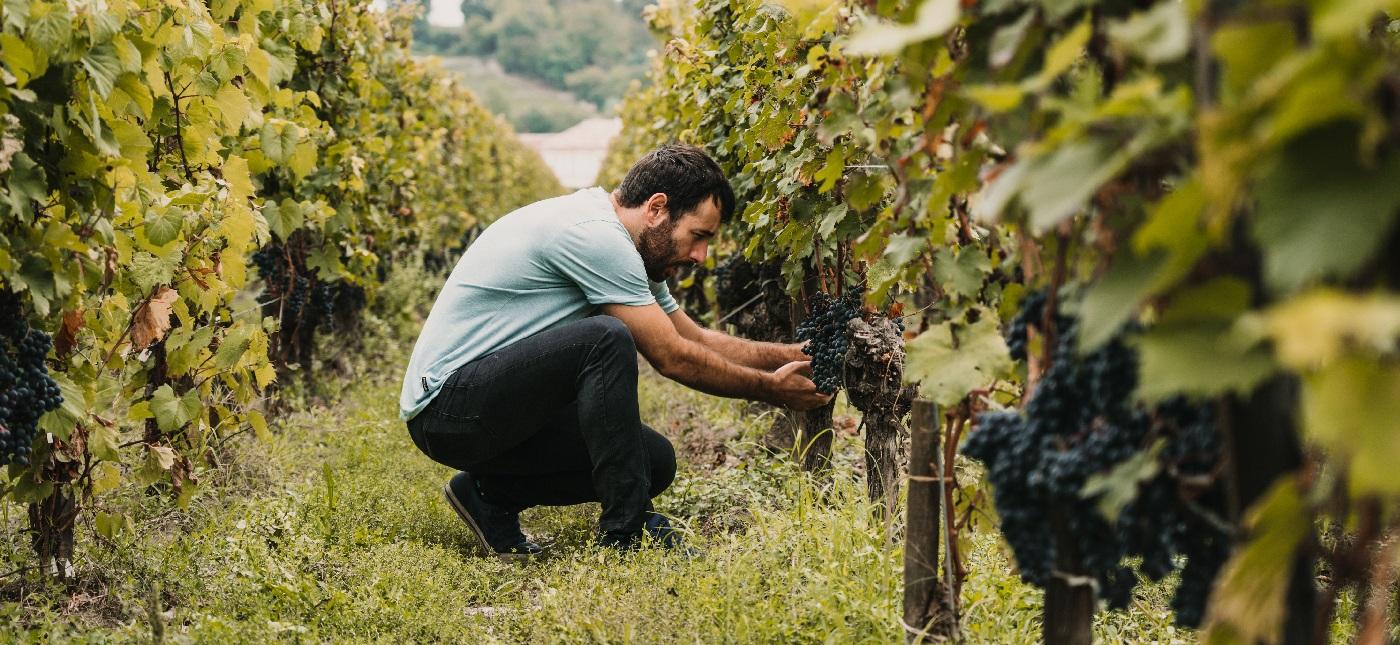 Enchanting Travels France Tours walking around vineyards in Bordeaux, France.