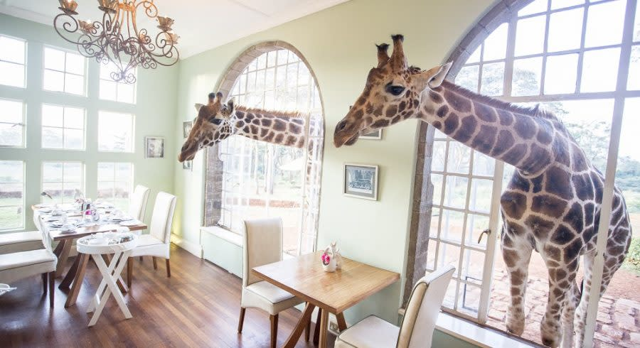 Two giraffes through the window best places to visit in 2019