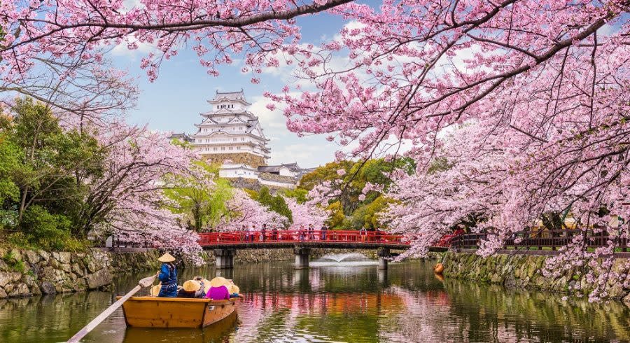 Cherry Blossom Festival In Japan When And Where Go