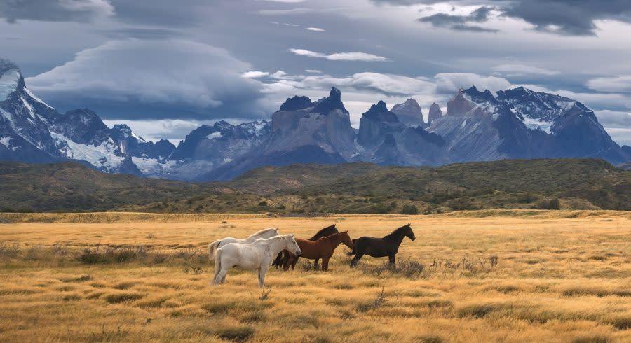 Pferde in Patagonien