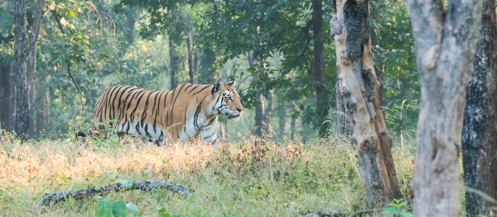 Wildlife Safari in Central India Tour Trip 1