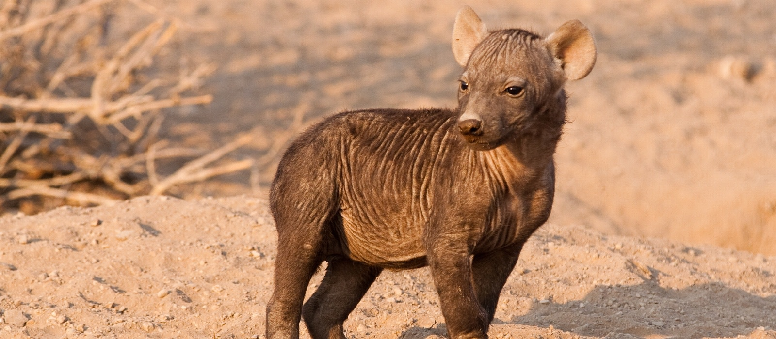 Reiseziel Tuli Wildschutzgebiet Botswana