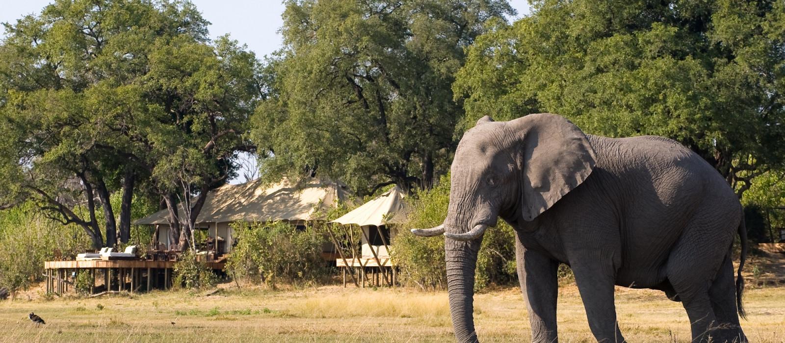 Botswana Safari Highlights Tour Trip 1