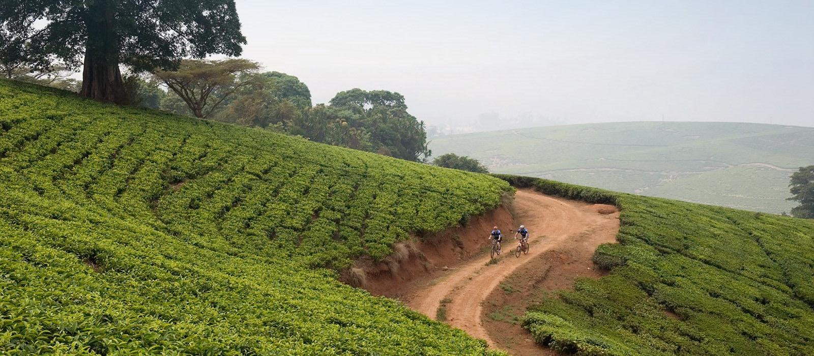 Malawi Rundreise: Natur, Safari und Lake Malawi Urlaub 1