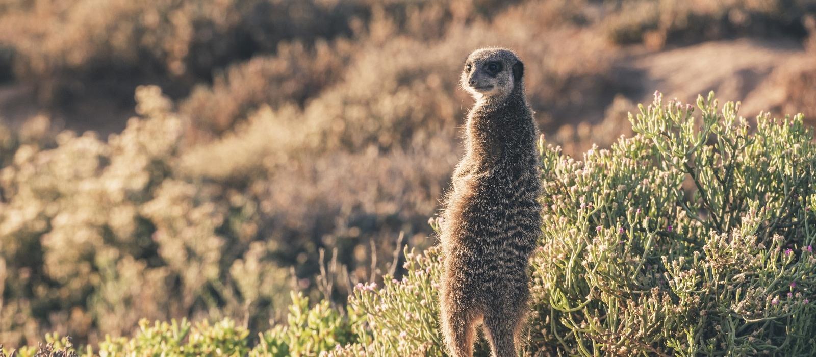 Südafrika & Mauritius: Wilde Tiere, weites Land & tropische Träume Urlaub 1