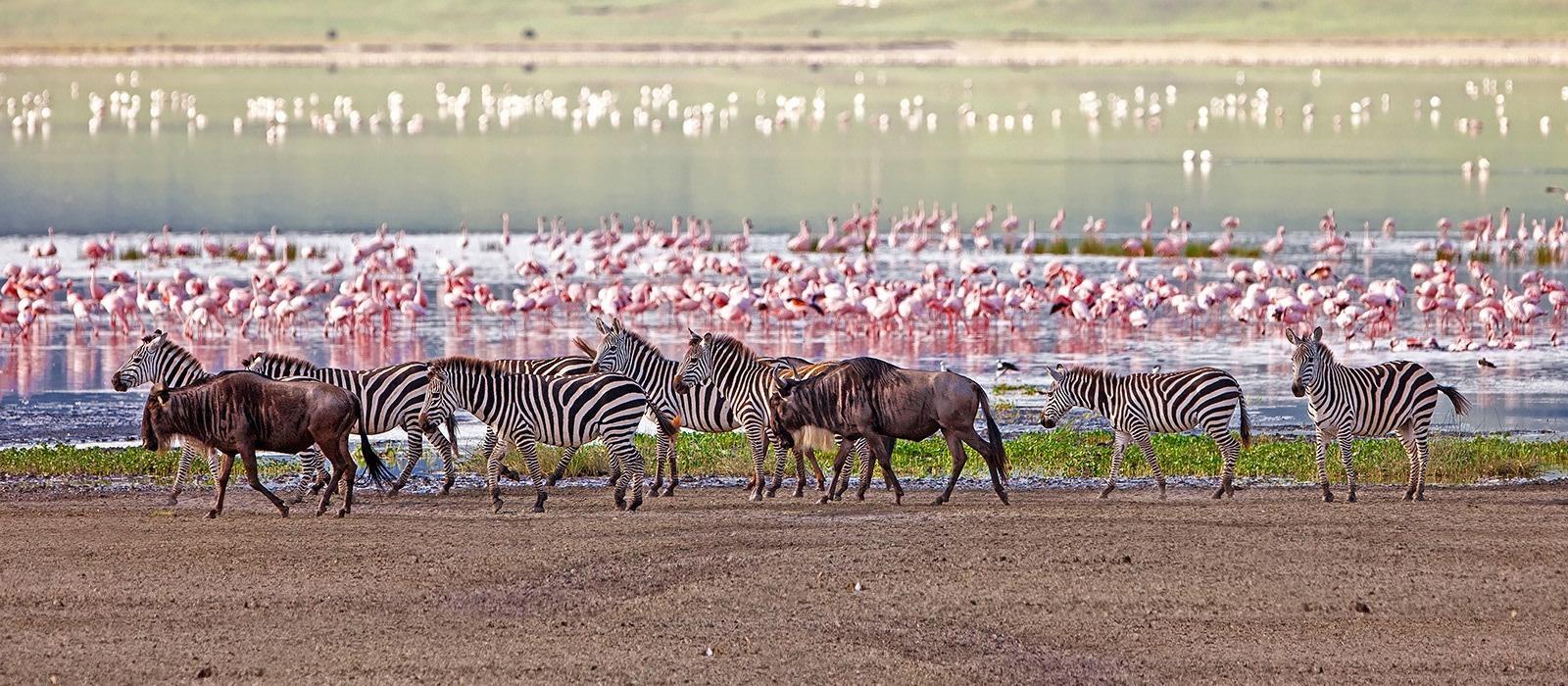 Luxus am See, Wildnis und wilde Tiere in Tansania Urlaub 1