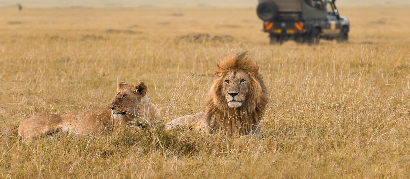 Kenia & Sansibar Reise: Safaris & Strände Urlaub 1