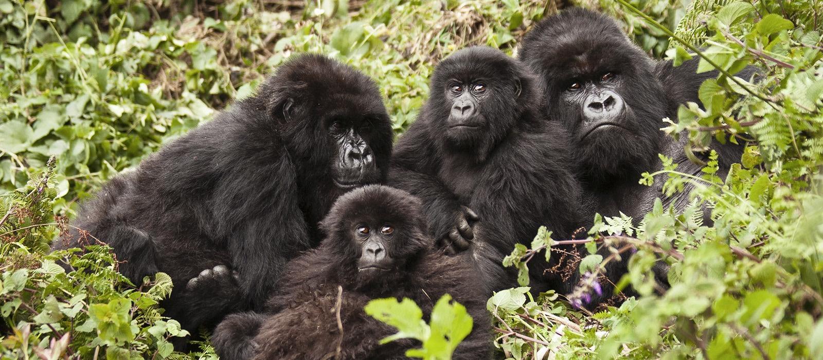 Ruanda & Tansania: Gorilla Trekking & geheimnisvolles Sansibar Urlaub 1