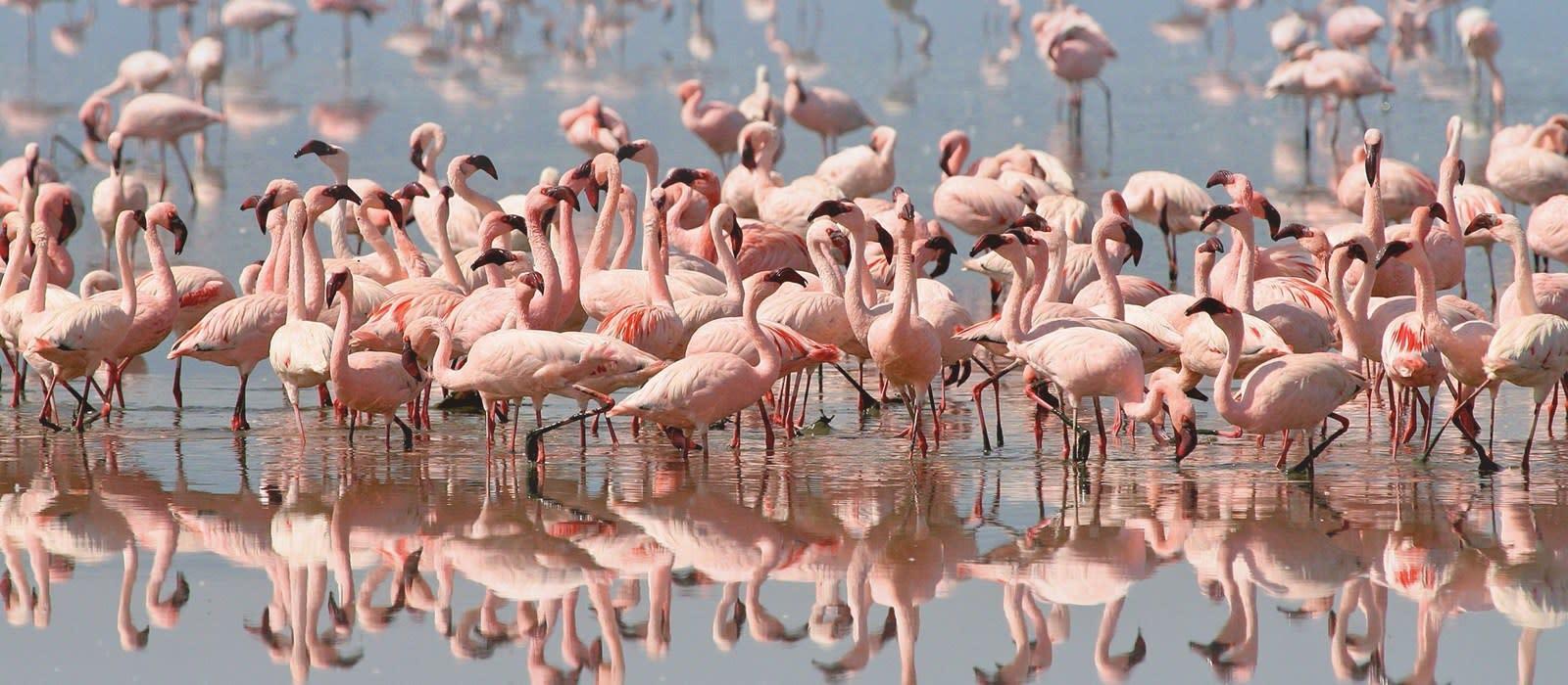 Reiseziel Manyara See Tansania