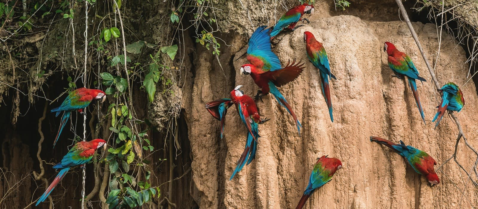 Brazil's Wildlife & Natural Wonders Tour Trip 1