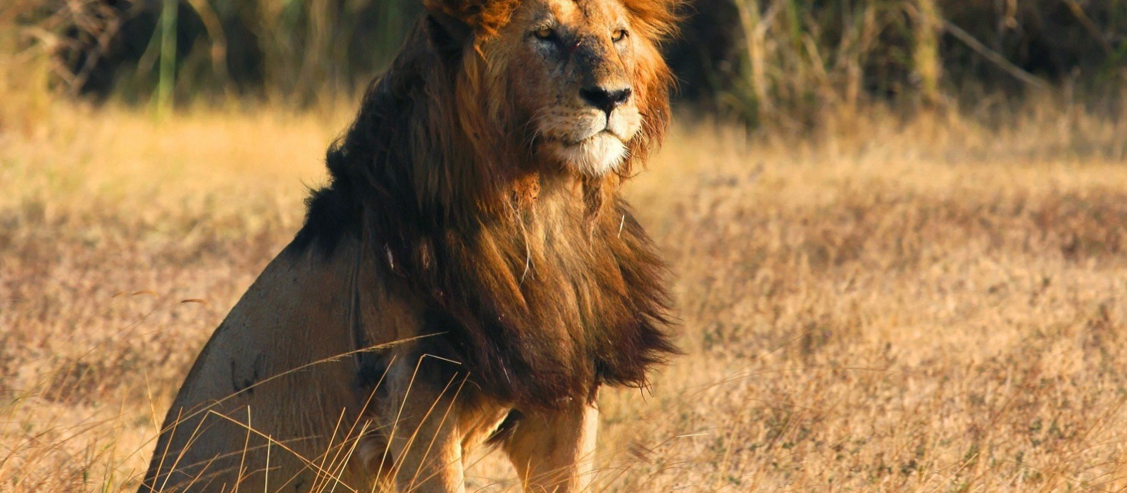 Tansania, Simbabwe & Botswana: Vom Kilimandscharo zu den Viktoriafällen Urlaub 1