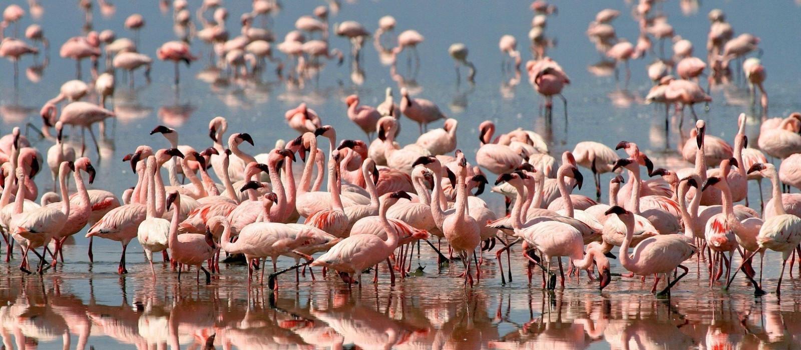 Tanzania and Kenya Highlights Tour Trip 1