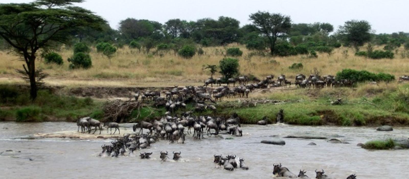 Tansania und Ruanda: Gorilla Trekking und Safari Abenteuer Urlaub 1