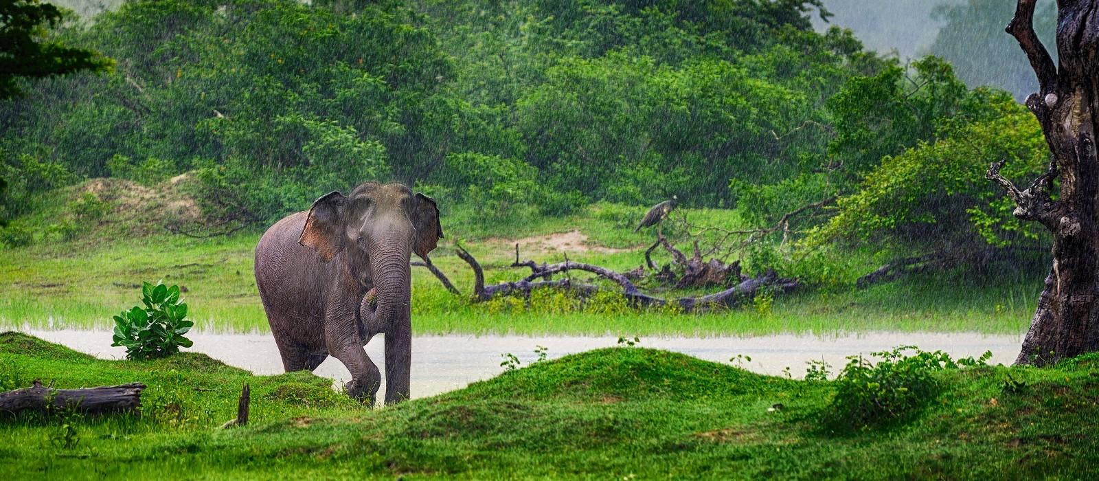 Luxurious Introduction to Sri Lanka Tour Trip 1