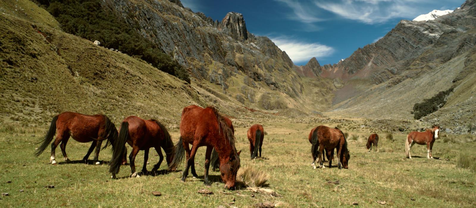 Machu Picchu, Inka-Pfad und Titikaka-See Urlaub 1