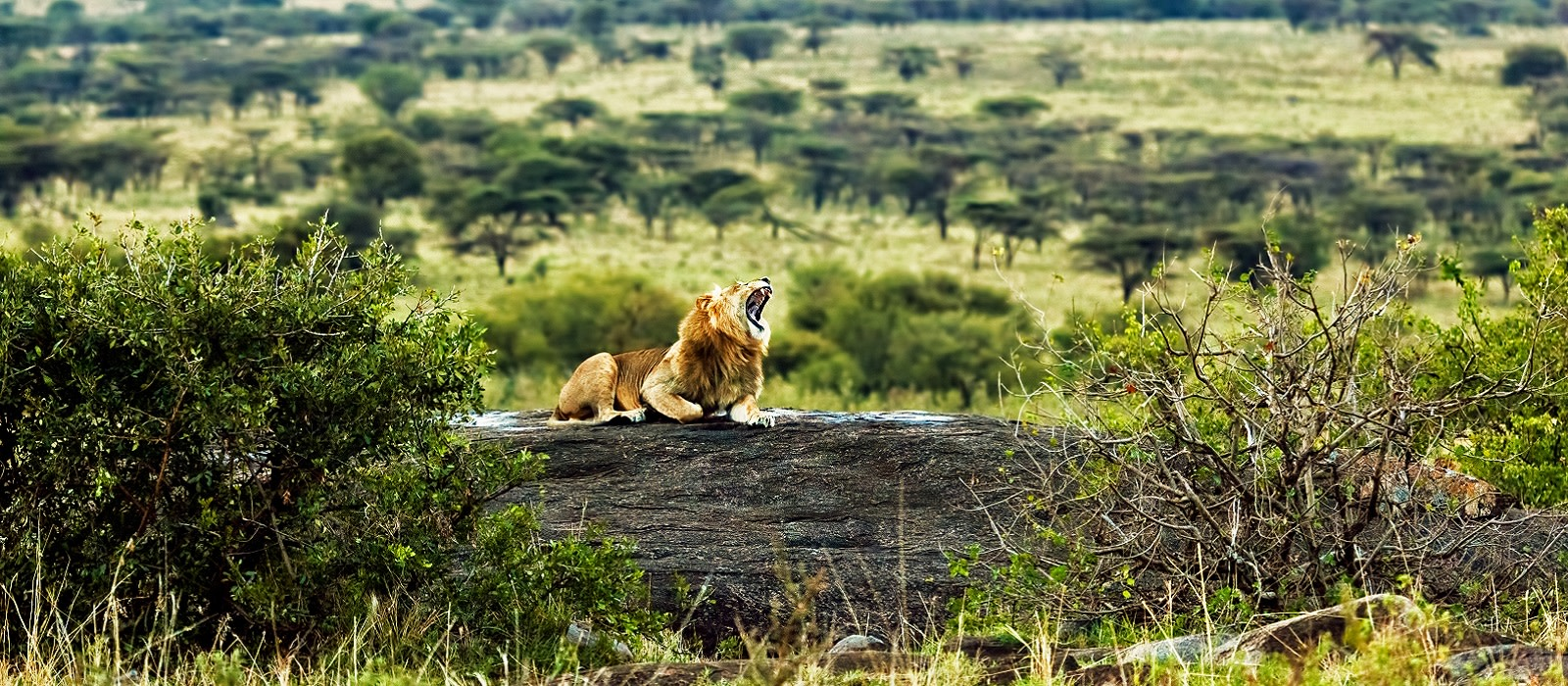 Lakeside Luxury and Wildlife in Tanzania Tour Trip 1