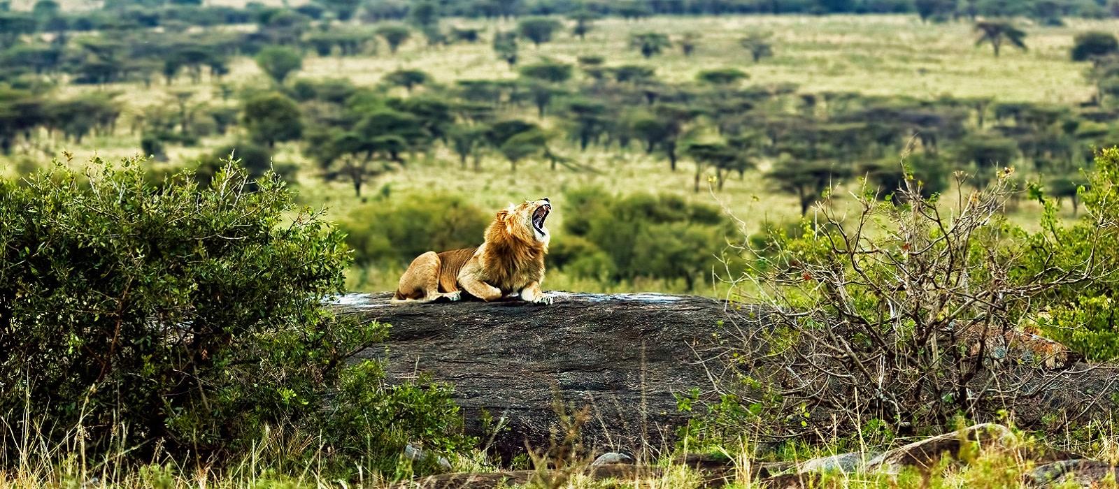 Vom Kilimanjaro zum Viktoriasee Urlaub 1