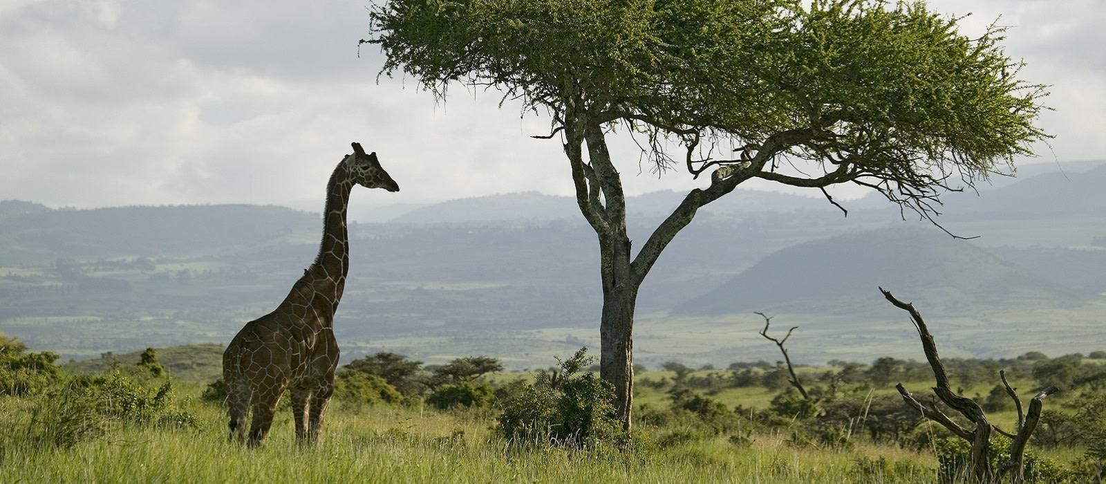 Kenya Safari and Seychelles Island Paradise Tour Trip 1