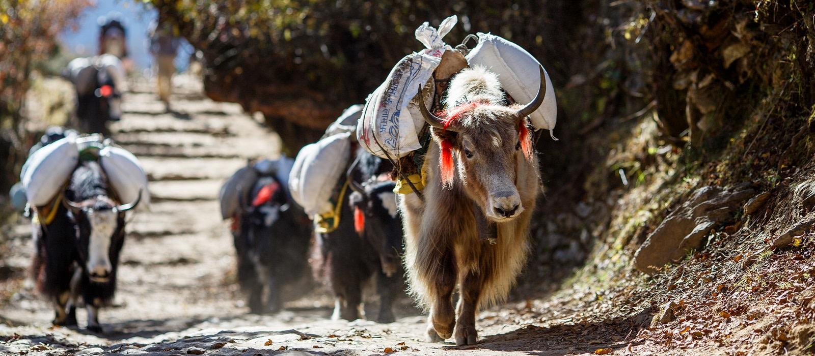 Highlights of the Himalayas: Nepal, Bhutan and Tibet Tour Trip 1