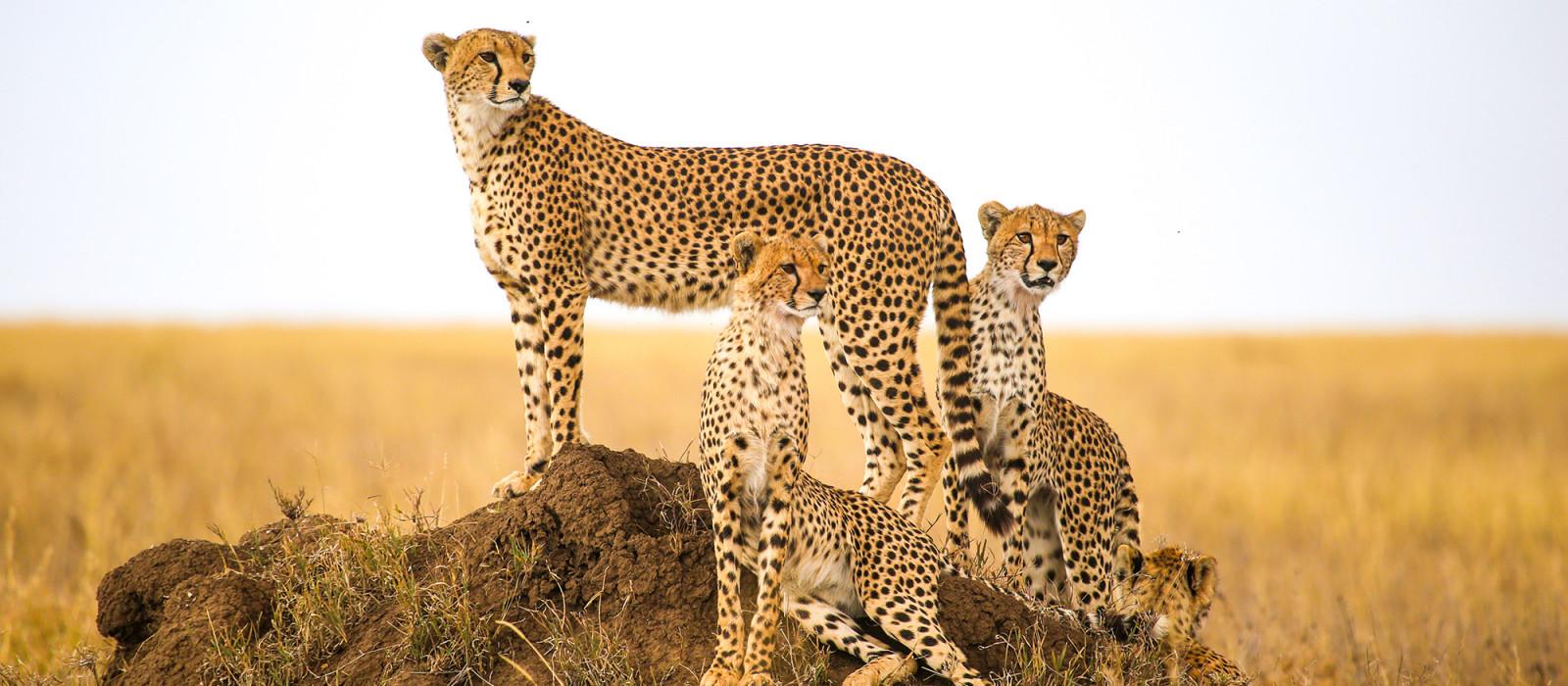 Tansania: Safari & authentische Einblicke Urlaub 1
