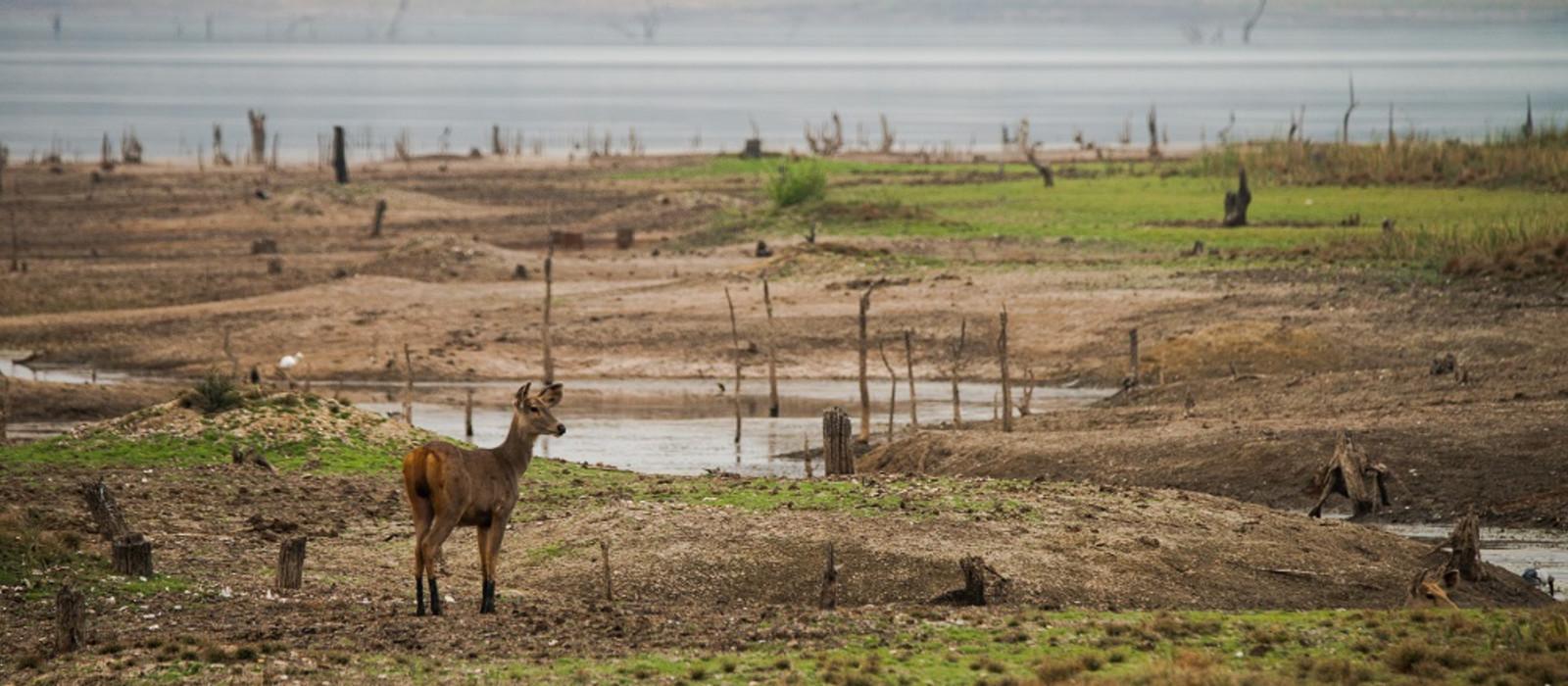 Safarireise in Zentralindien Urlaub 1