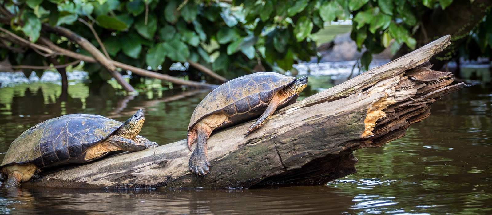 Reiseziel Tortuguero Costa Rica