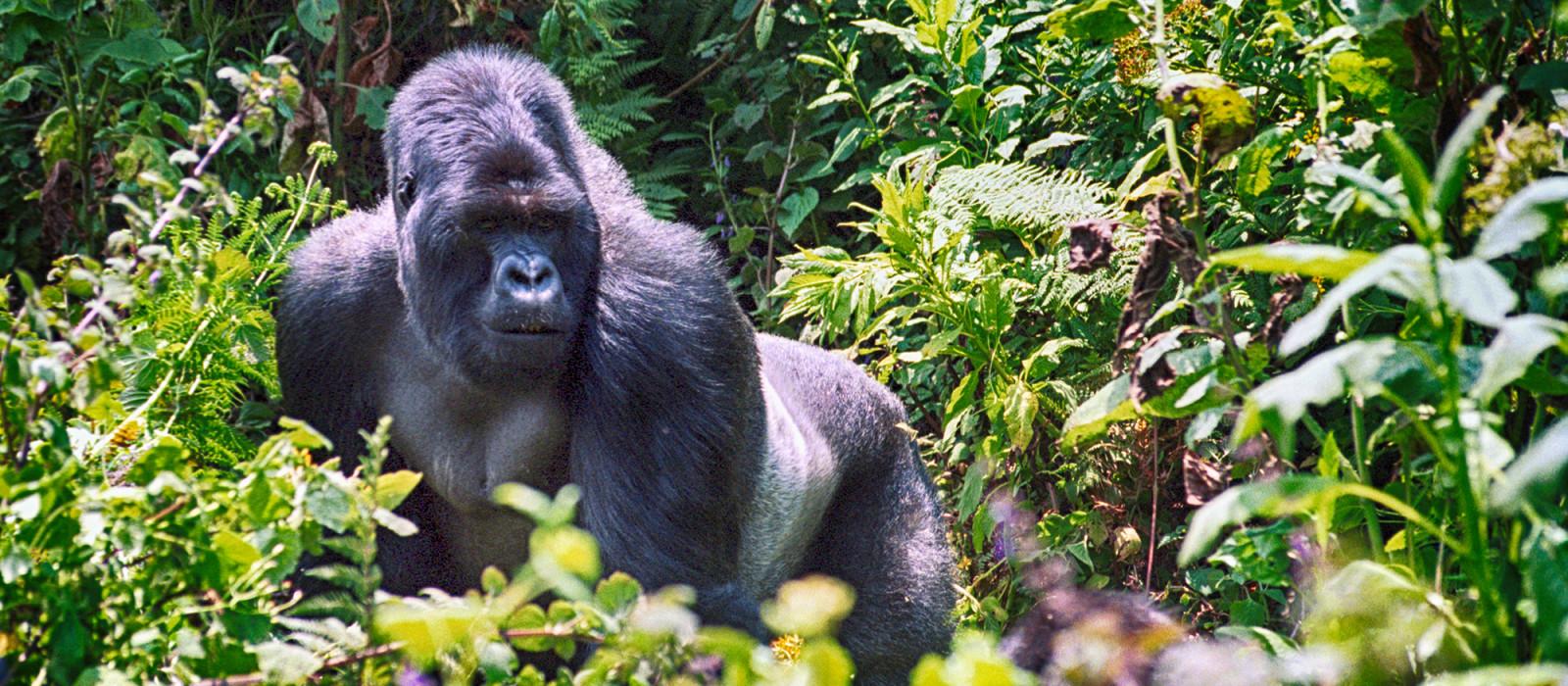 Highlights Africa: Masai Mara, Gorillas and Cape Town Tour Trip 1